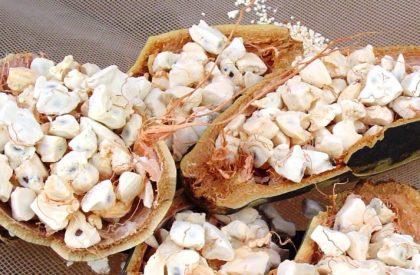 Tabaldi-Fruit